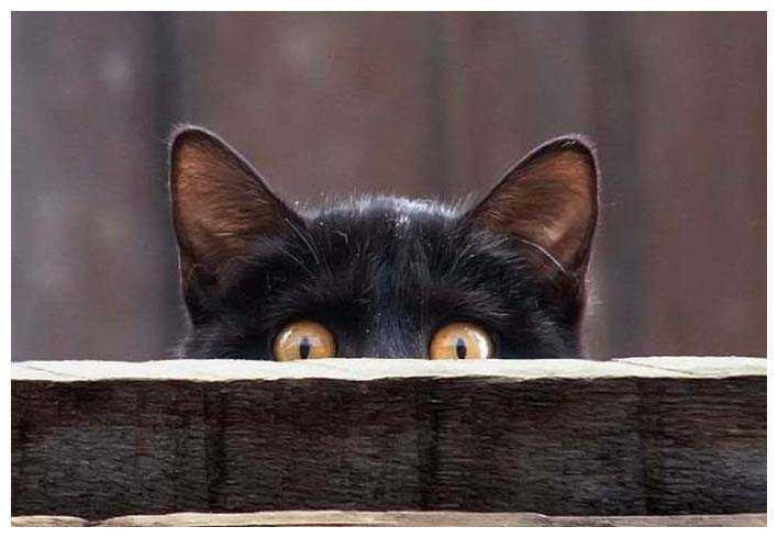 Черната котка - лош късмет или просто суеверие