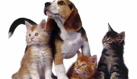 кучета котки